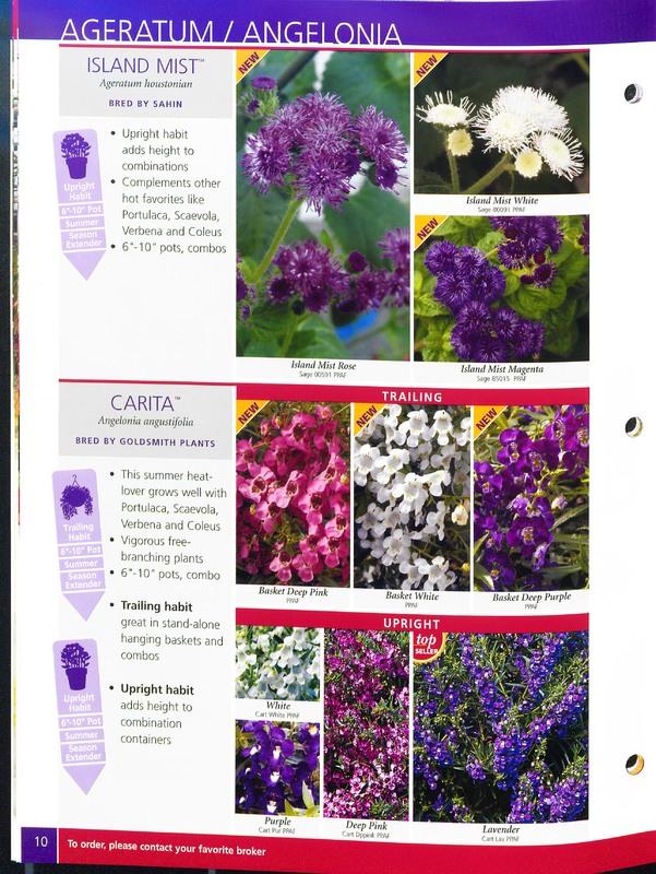 2005_annuals_the_flower_fields_0010.jpg