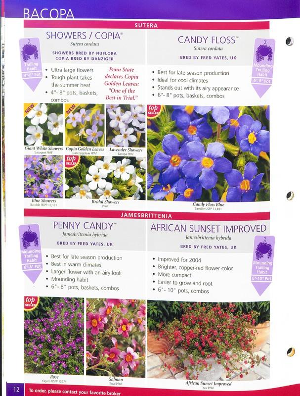 2005_annuals_the_flower_fields_0012.jpg