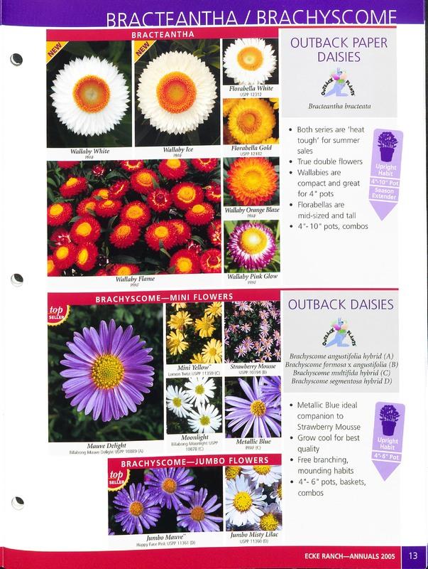 2005_annuals_the_flower_fields_0013.jpg