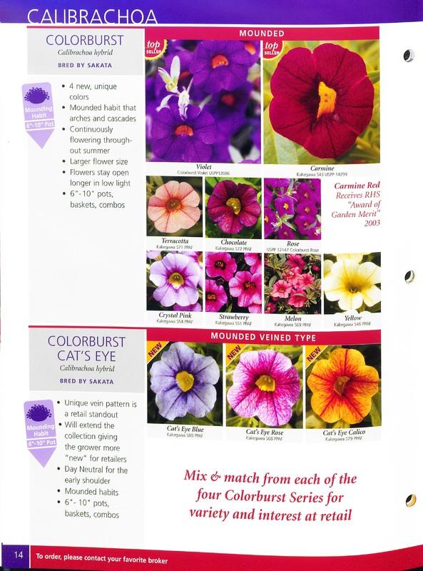 2005_annuals_the_flower_fields_0014.jpg