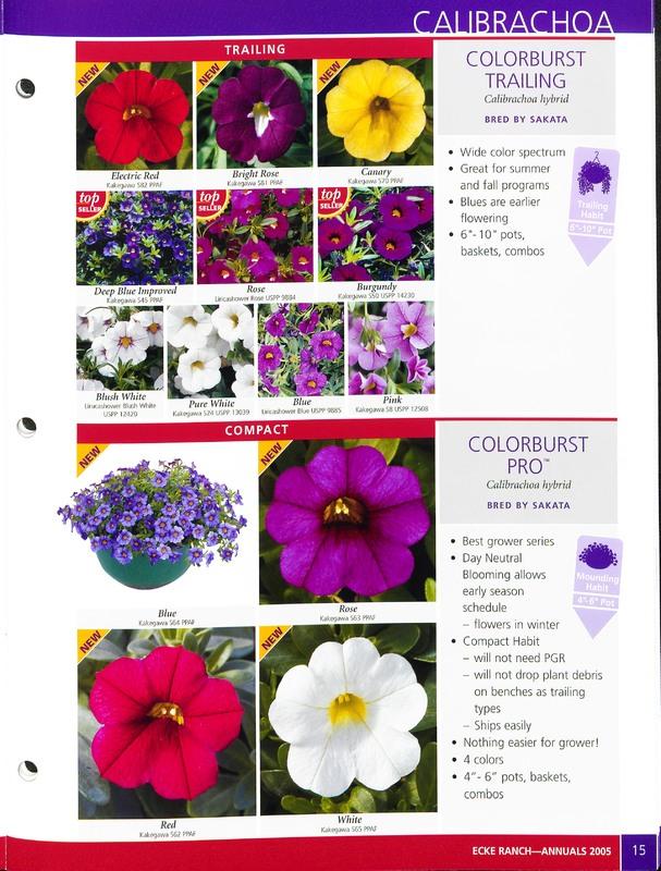2005_annuals_the_flower_fields_0015.jpg