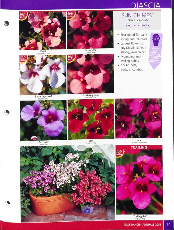 2005_annuals_the_flower_fields_0017.jpg