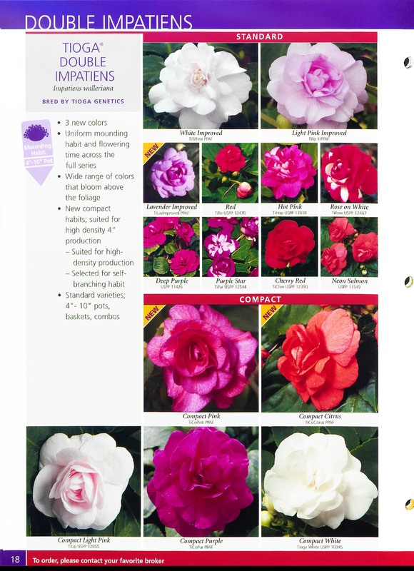2005_annuals_the_flower_fields_0018.jpg