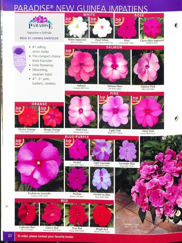 2005_annuals_the_flower_fields_0020.jpg