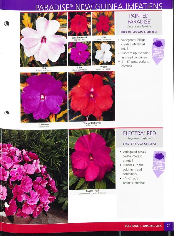 2005_annuals_the_flower_fields_0021.jpg