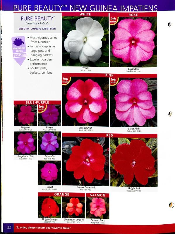 2005_annuals_the_flower_fields_0022.jpg