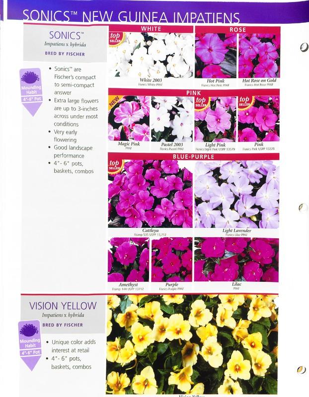 2005_annuals_the_flower_fields_0028.jpg