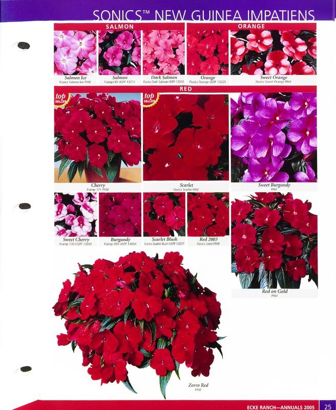 2005_annuals_the_flower_fields_0029.jpg