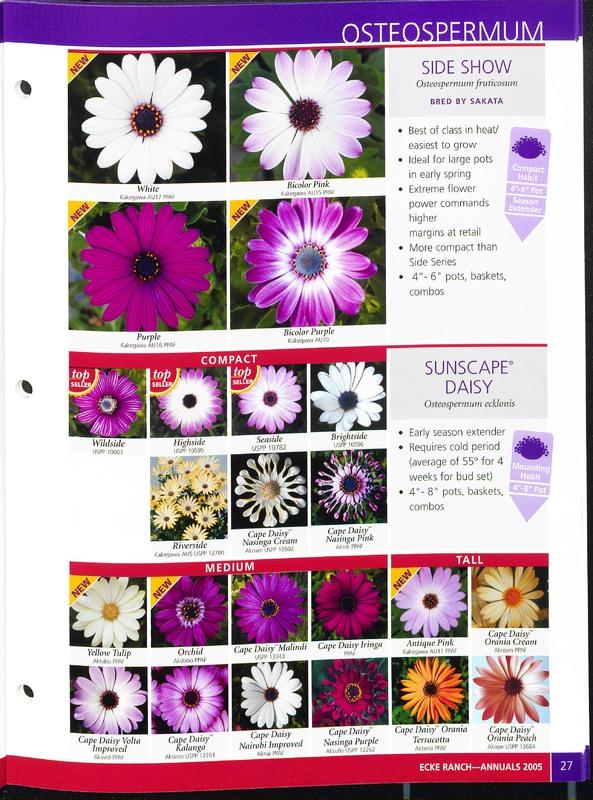 2005_annuals_the_flower_fields_0031.jpg