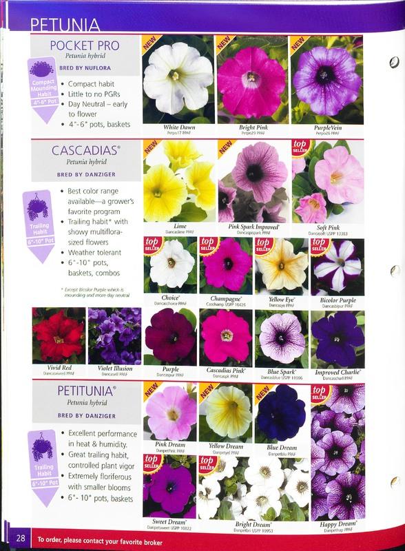 2005_annuals_the_flower_fields_0032.jpg