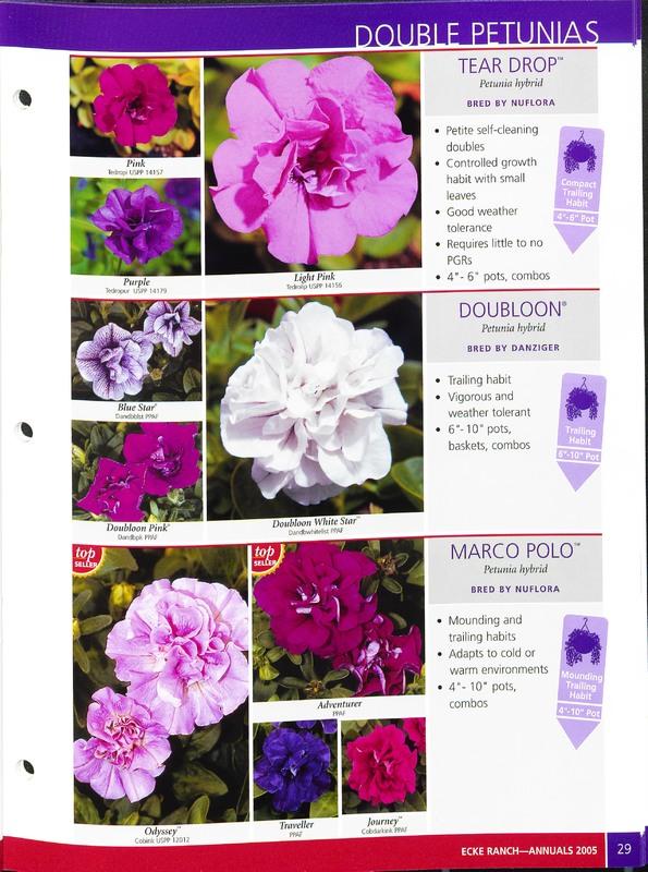 2005_annuals_the_flower_fields_0033.jpg