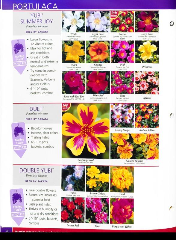 2005_annuals_the_flower_fields_0034.jpg