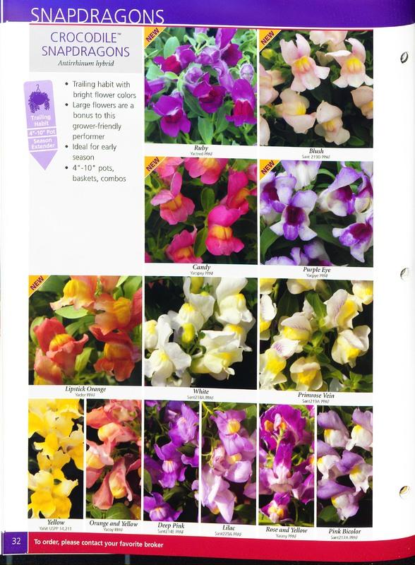 2005_annuals_the_flower_fields_0036.jpg