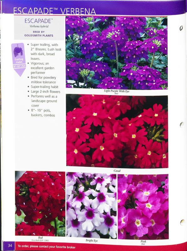 2005_annuals_the_flower_fields_0038.jpg