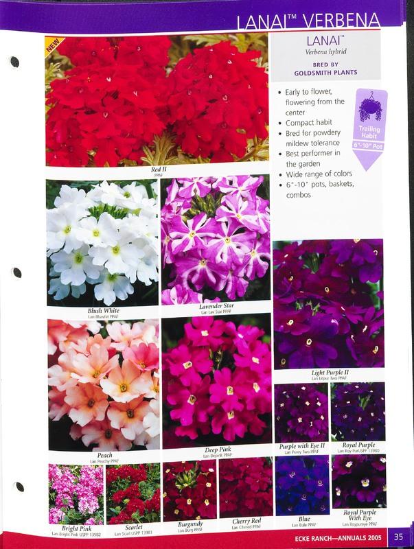 2005_annuals_the_flower_fields_0039.jpg