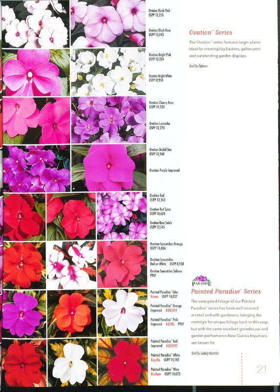Ecke_2009_annuals_0023.jpg