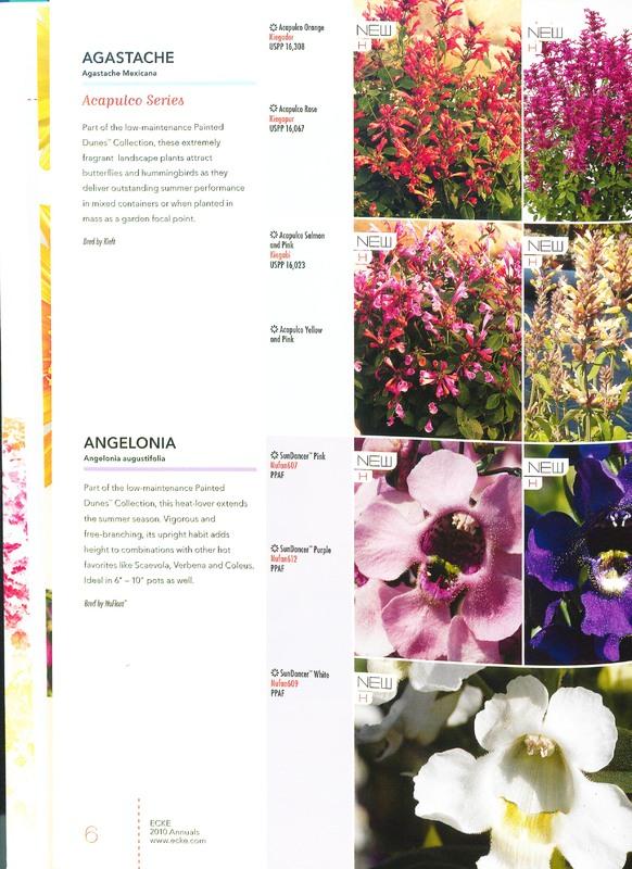 Ecke_2010_annuals_0008.jpg