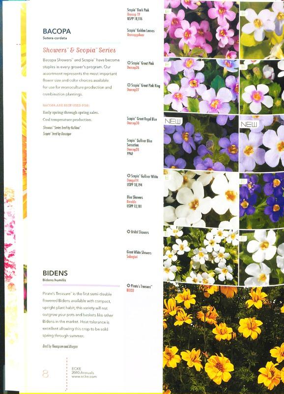 Ecke_2010_annuals_0010.jpg