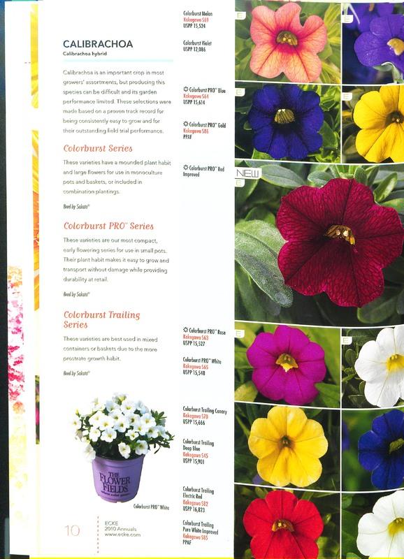 Ecke_2010_annuals_0012.jpg