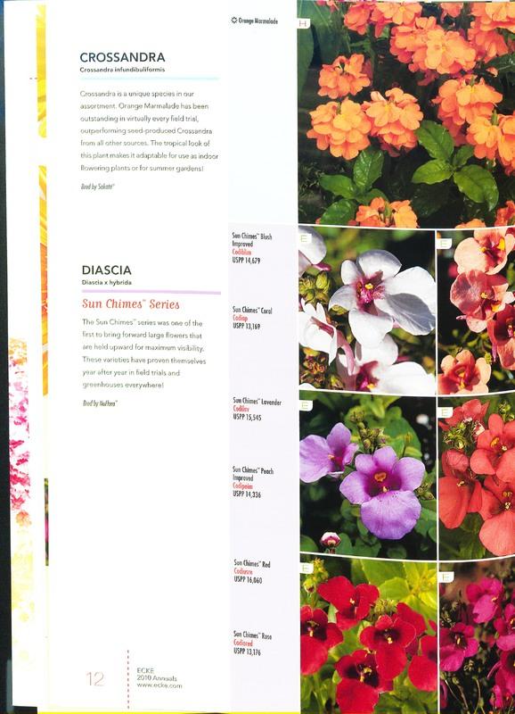 Ecke_2010_annuals_0014.jpg