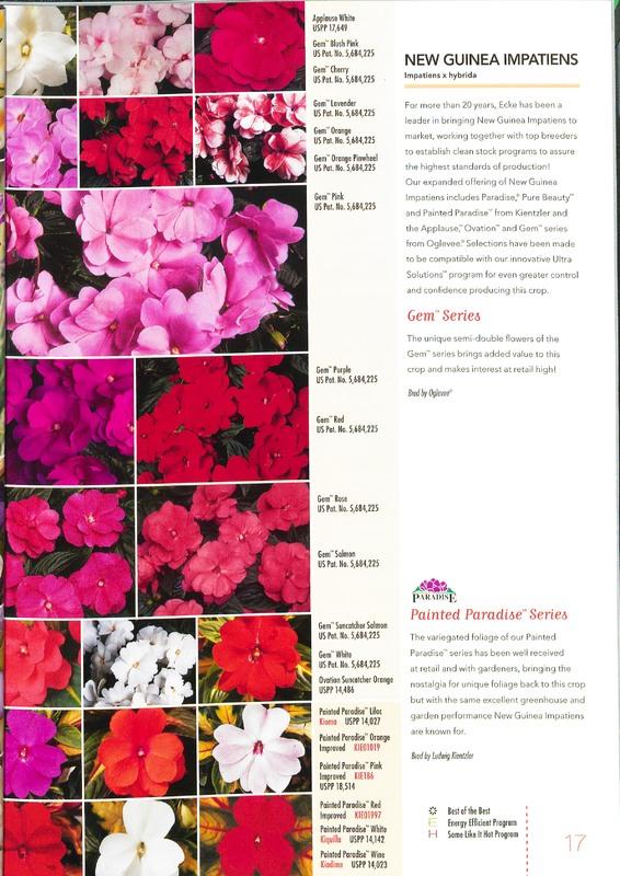 Ecke_2010_annuals_0019.jpg