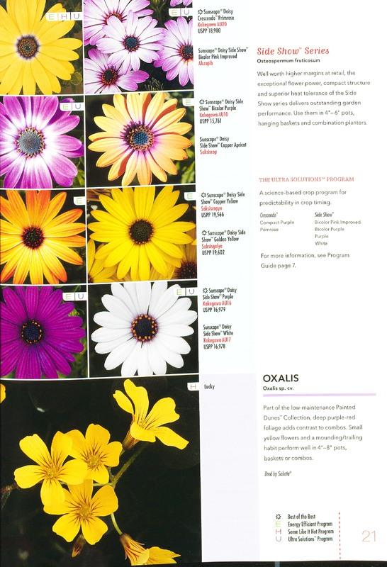 Ecke_2010_annuals_0023.jpg