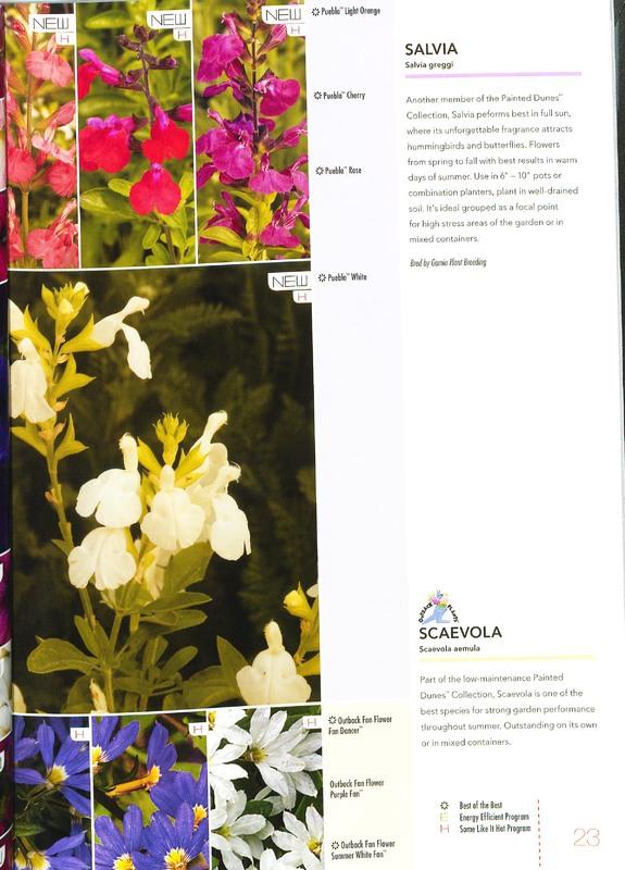 Ecke_2010_annuals_0025.jpg