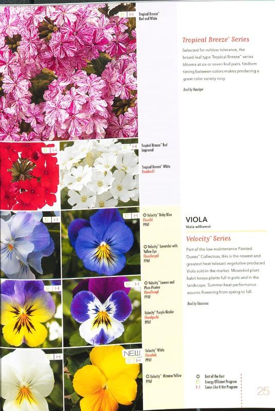 Ecke_2010_annuals_0027.jpg