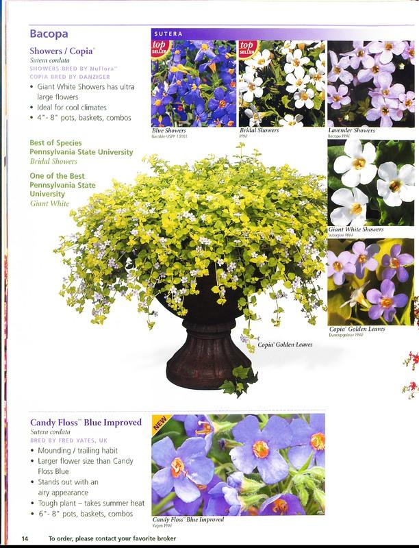Ecke_Ranch_2006_annuals_0014.jpg
