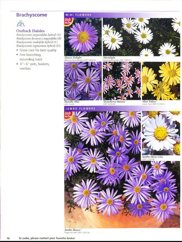 Ecke_Ranch_2006_annuals_0016.jpg