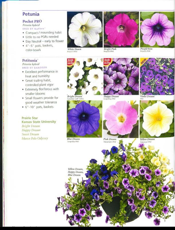Ecke_Ranch_2006_annuals_0042.jpg