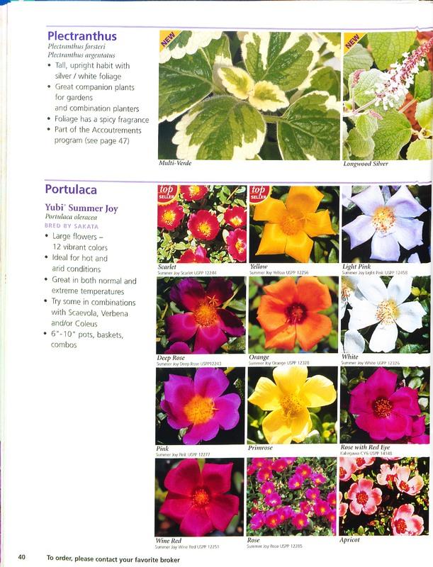 Ecke_Ranch_2006_annuals_0044.jpg