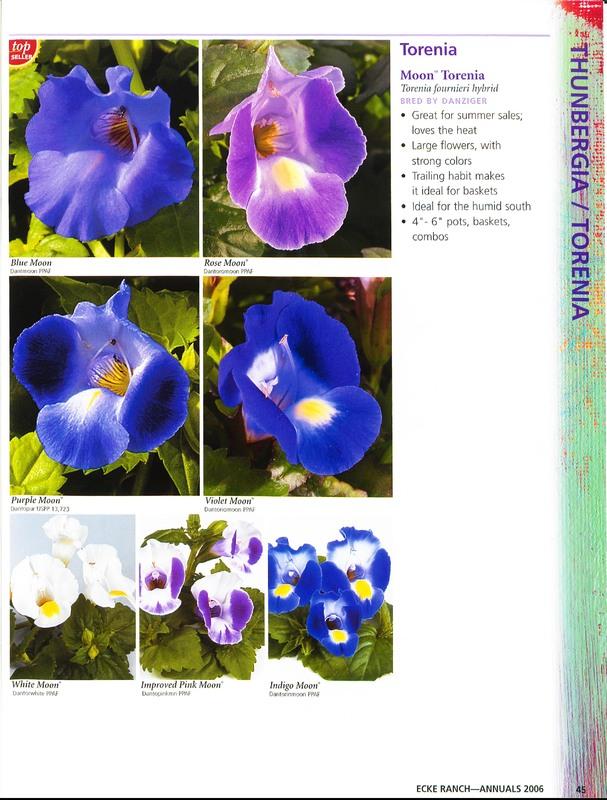 Ecke_Ranch_2006_annuals_0049.jpg