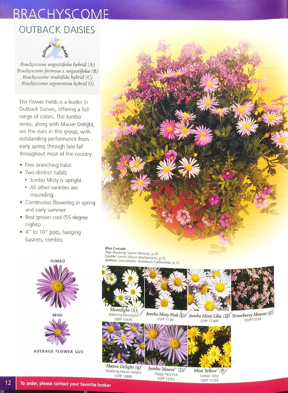 2003_annuals_flower_fields_0012.jpg