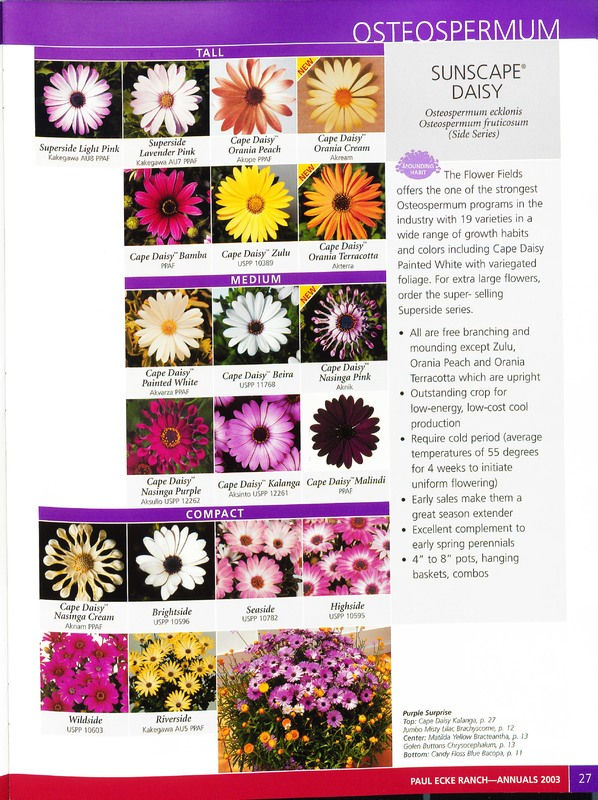 2003_annuals_flower_fields_0031.jpg