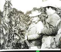 Employees cutting field-cut poinsettias