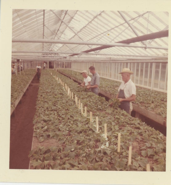 greenhouse_workers.jpg