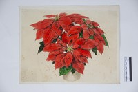 Poinsettia watercolor (?)